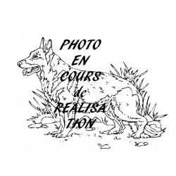 """CHIEN Géant """"BERGER ALLEMAND"""" (800x800)"""